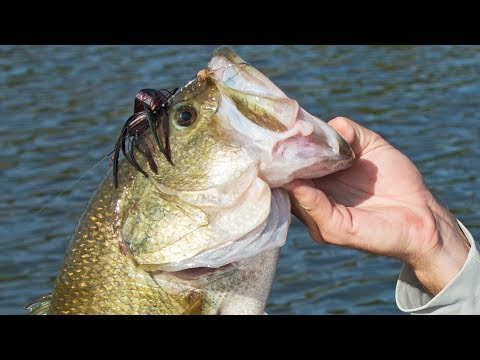 Fishing Buzz Baits for Big Bass | Lure Tips and Tricks