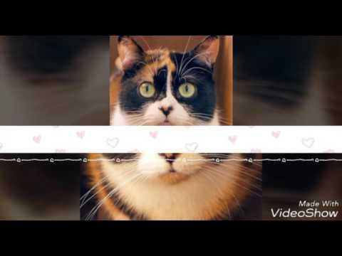Котик Куки с канала SlivkiShow {вам подарок}