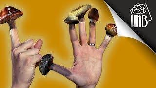 6 najbardziej niezwykłych grzybów