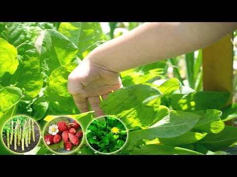 8 Vegetables And Fruits That Will Keep growing Year After Year - Gardening Tips