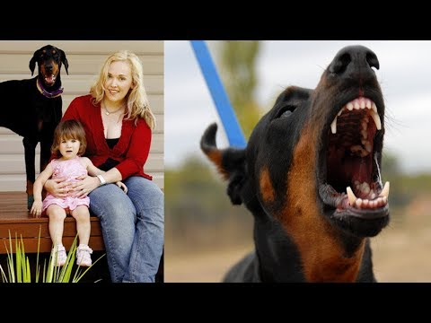 Mom Is Horrified When Her Doberman Drags Her Baby Across The Yard Until She Sees Why