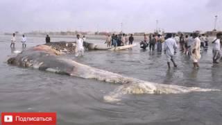 Самая большая акула в мире  Топ 10 фактов #