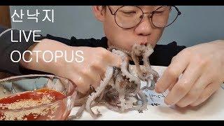 산낙지 리얼사운드 먹방 Live octopus mukbang eating show