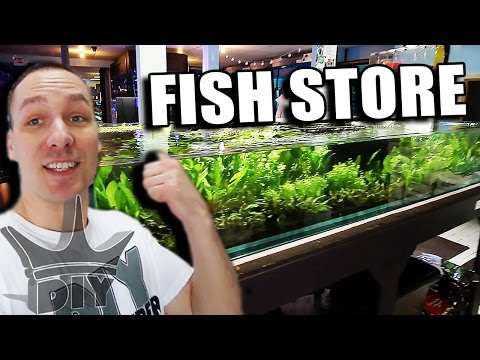 MY LOCAL AQUARIUM FISH STORE TOUR - UPDATE