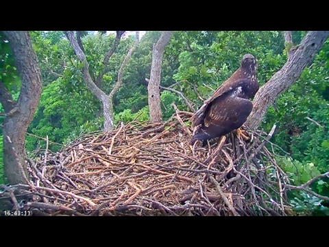 EAGLE CAM 2017 - Earth Conservation Corps, MPDC - Washington, DC