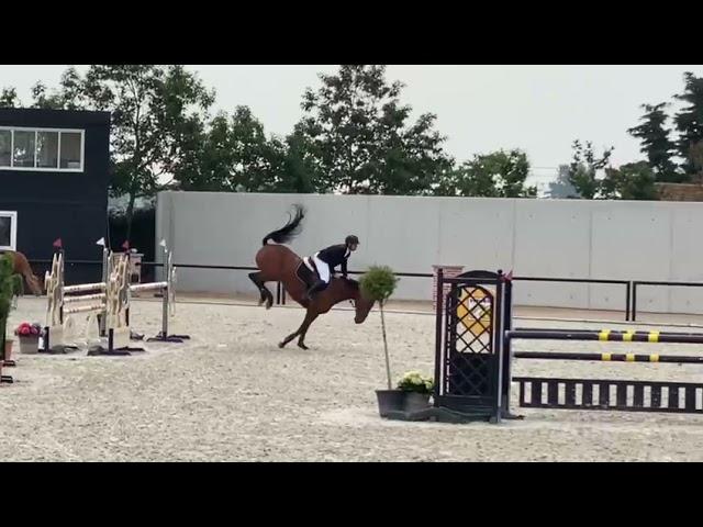 Half-sister Air Love Bull's eye Z finalist STX cyclus 5 years old horses.