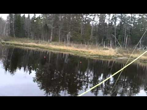 Fly Fishing at Beaver Pond