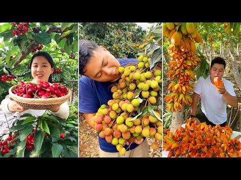 , title : 'Awesome Cutting Fruit on The Tree | Amazing Fruits Cutting Skills