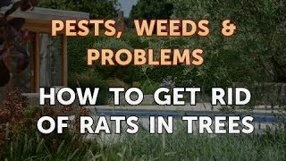 How to Get Rid of Rats in Trees