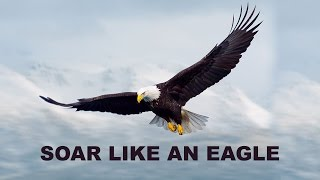 How An Eagle Tackles A Storm?