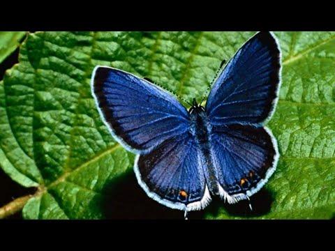 Papilloma esofitico vescica