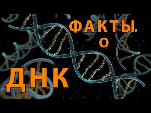 Вирусы гепатит c