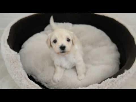 Quando i cani strofinano la zampetta sull 39 occhio cosa vuol for I cani youtube