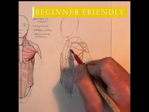 Online Course: Basic Human Anatomy for Artists - Part 1