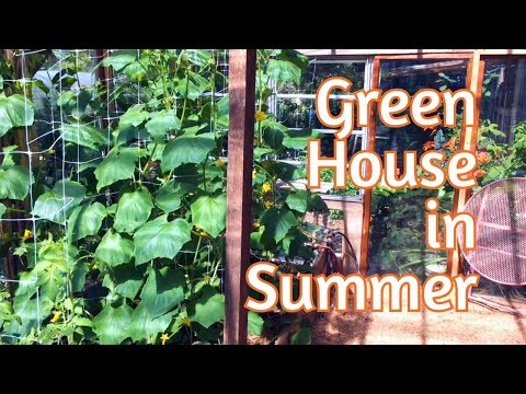 , title : 'Greenhouse - Mid Summer Update