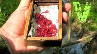 Как хранить мотыля для рыбалки летом