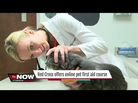 Crash course in pet first-aid - YouTube