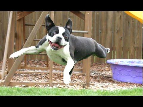 dog fails a funny dog jump fails compilation new hd
