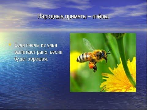 ПЧЁЛЫ (Народные приметы про пчёл №1)