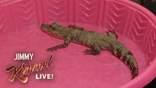 Jimmy Kimmel Pranks Guillermo with Baby Alligator - Video Youtube