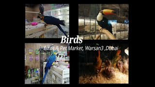 BIRDS at Birds and Pet Market Dubai ||  Scarlet Macaw Parrots