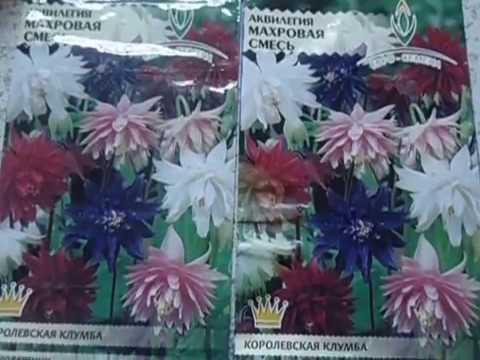 АКВИЛЕГИЯ  ОСОБЕННОСТИ ПОСЕВА  Видеоурок от Ольги Черновой для начинающих садоводов  27 января 2017