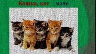 Смотреть онлайн Урок татарского языка: Животные