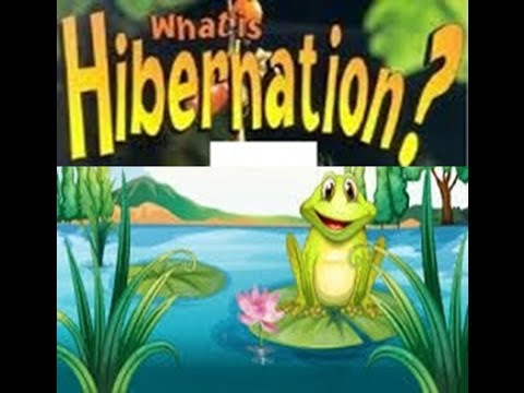 Hibernation Definition  for Kids  - Toddlers,Kindergarten,Preschoolers