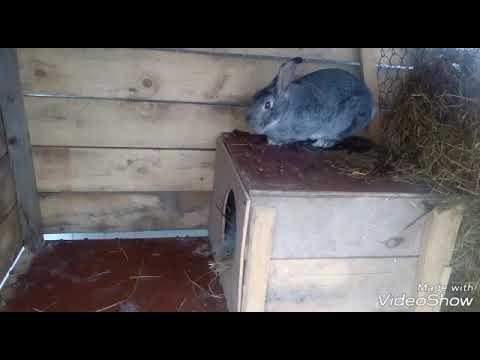 Крольчатам 10 дней//осмотр гнезда.