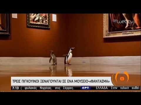 Πιγκουίνοι…. τουρίστες βολτάρουν σε μουσείο! | 19/05/2020 | ΕΡΤ