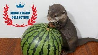 カワウソ ビンゴ【2018年のTOP5総集編】Otter bingo 2018 Top 5 videos - dooclip.me