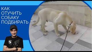 Как отучить собаку подбирать(Один из способов)