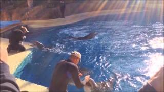 Dolphin Training at the Secret Garden
