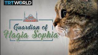 Meet the cat that guards the Hagia Sophia