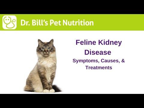 Video Kidney Disease in Cats