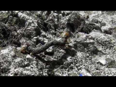 Hasnyálmirigyrák quora