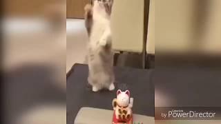 #Смешныекотики приколы кошек #Yulia няша Pets #Cat #kitty #котики 🐈🐈🐈