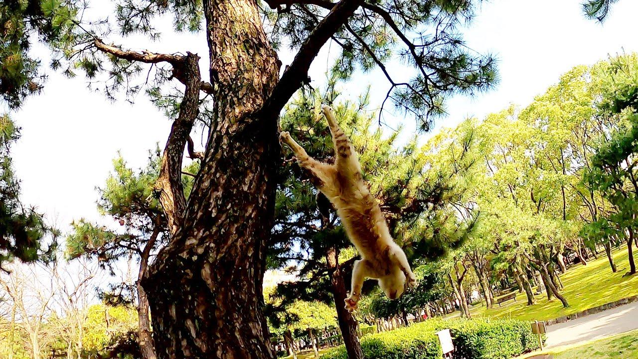 猫も木から落ちる!?