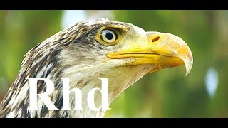The Secret Life of the Circler, Birds. 2018 HD Documentary.
