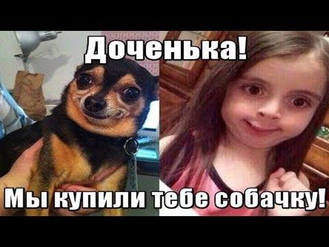Ржачные мемы ! Собака похожа на хозяйку сходство 100% !