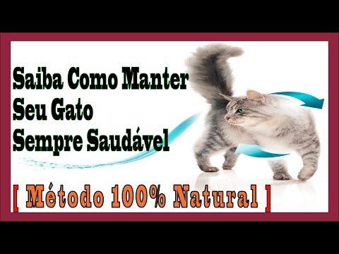 ➽ Como Manter Seu Gato Saudável - Método 100% Natural║ Bem Estar Segredos