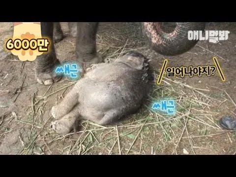 엄마코끼리가 잠든 아기코끼리 깨우는 방법 (대박ㅋ) ㅣ Watch How A Mama Elephant Wakes Her Baby Elephant Up *LIT*
