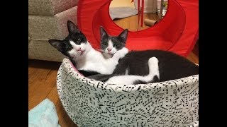 Kitten Cuddle Room -  LIVE 24/7 Foster Kitten Cam  - Coral and Nala