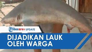Temukan Ikan Hiu Hampir Satu Meter Terjebak di Sungai Musi, Digoreng Warga dan Justru Dijadikan Lauk