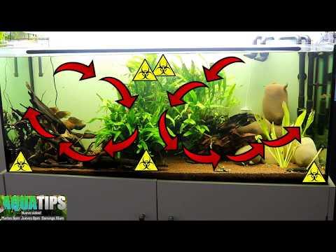 Como colocar la entrada y salida de los filtros externos. Corrientes. || AquaTips