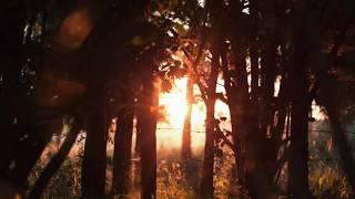 An Encounter In Kentucky 0- Bigfoot's Wilderness