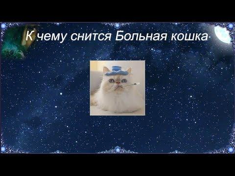 К чему снится Больная кошка (Сонник)