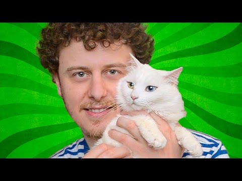 Otázky a odpovědi s kočkami - Norman