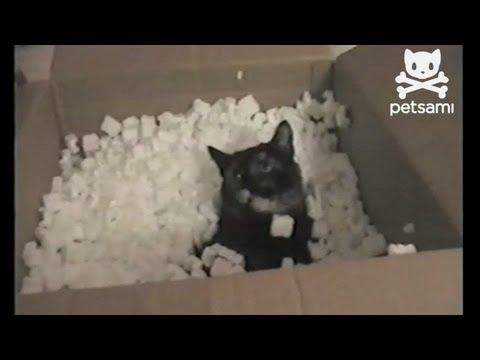 Co się stanie, gdy wrzucisz kota do pudełka ze styropianowym wypełniaczem