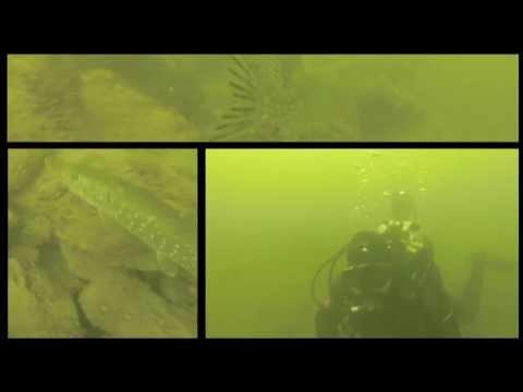 Barsche, Hechte und ein fetter Aal, Möhnetalsperre Delecker Brückenpfeiler,Nordrhein-Westfalen,Deutschland